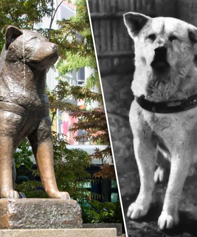 Amanda Keller Brings To Our Attention Japan's Hachiko Dog ...