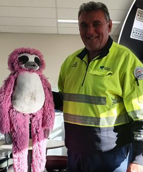 'Slothie' The Sloth Reunited With His Family After Being Rescued From Harbour Bridge
