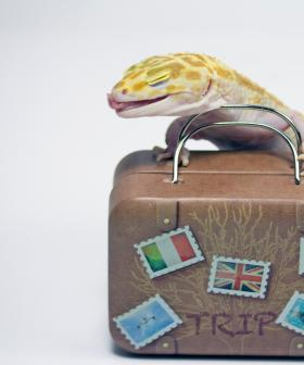 Lizards Found in Rice Cookers in QLD Wildlife Trafficking Incident