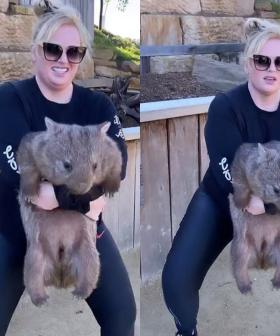 "Animal Activists ""Disappointed"" In Rebel Wilson's Recent Instagram Story"