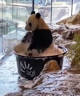 Wang Wang The Panda Has A PSA For Us To Remember To Wash Our Paws And It's So Cute!