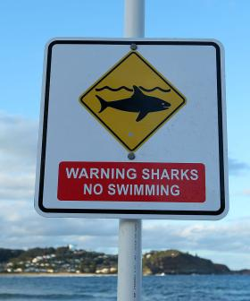 NSW Man Saved His Wife From Attack By Repeatedly Punching Shark