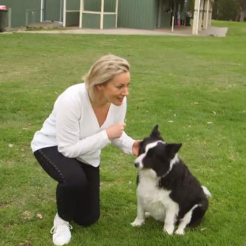 Would You Let A Stranger Walk Your Dog?