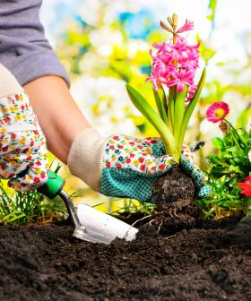 Get The Best Garden In The Street With These Top Tips!