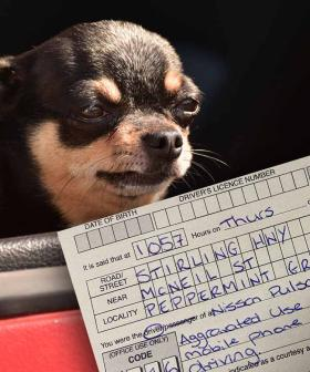 Aussie Driver Cops $1000 Fine For Taking Pictures Of Their Dog While DRIVING!