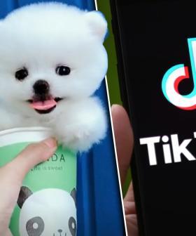 Graphic Video Of Live Suicide Hidden Behind Puppy Footage On TikTok