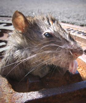 Man Swarmed By RATS After Falling Into A SINKHOLE!