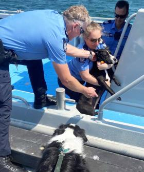 Lucky Aussie Dog Plucked Out Of Ocean