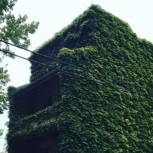 "Sydney's ""Scariest"" House Is Becoming Overgrown By IVY!"