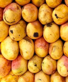 Mangoes Taken Off Supermarket Shelves After Maggots Found