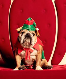 Westfield Is Doing Pet Photos With Santa, So The WHOLE Family Can Be Part Of The Christmas Tradition