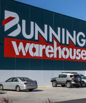 The 99 Cent Bunnings Product That Promises To Sort Your Fly Problem Out Is Stunning Australia