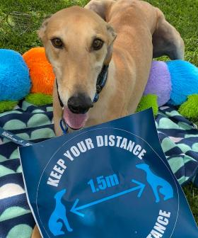 """""""Find My Furever Home"""": Adopting A Greyhound Has Just Become Easier!"""