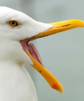 Seagull Eats Man's TONGUE After Woman Bites It Off In Street Fight