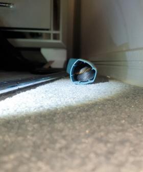 A Snake Has Been Found In An Aussie Teenager's Asthma Inhaler