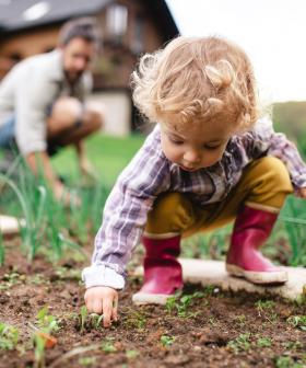 Does Your Home Veggie Patch Contain LEAD? These Sydney Suburbs Are The Most Toxic!