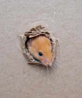 Here's Some Simple Tips On How To Protect Your House From Mice