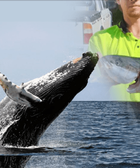 Help Nick Price, The NSW Teenager Who's In Critical Condition After A Whale Breached On His Small Boat