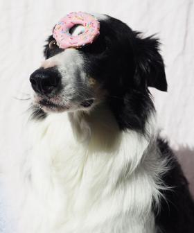 Love Spoiling Your Pet? Krispy Kreme Releases Doughnut Range For Dogs!
