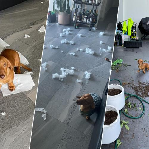 How To Stop Your Dog From Destroying Your Home When You Are Out